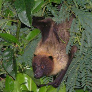石垣島ナイトサファリで見られる生き物