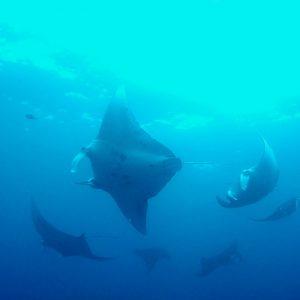 フサキアクティビティ 体験ダイビング