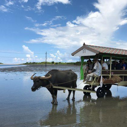 由布島の水牛車