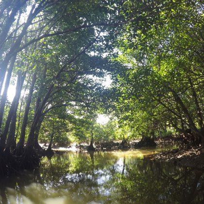 宮良川のカヌー・干潟散策