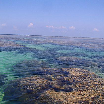 サンゴ礁の中でシュノーケル