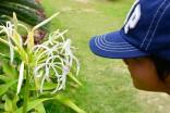 フサキガーデンには亜熱帯の植物が溢れています。そこに遊びに来ている昆虫を探そう!