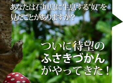 あなたは石垣島に生息する奴を見たことがありますか?
