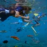 フサキビーチからシュノーケリングで見れる魚たち