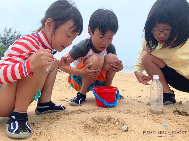アヤパニ子供教室フサキビーチ探検隊でヤドカリをみつけたお子様3人
