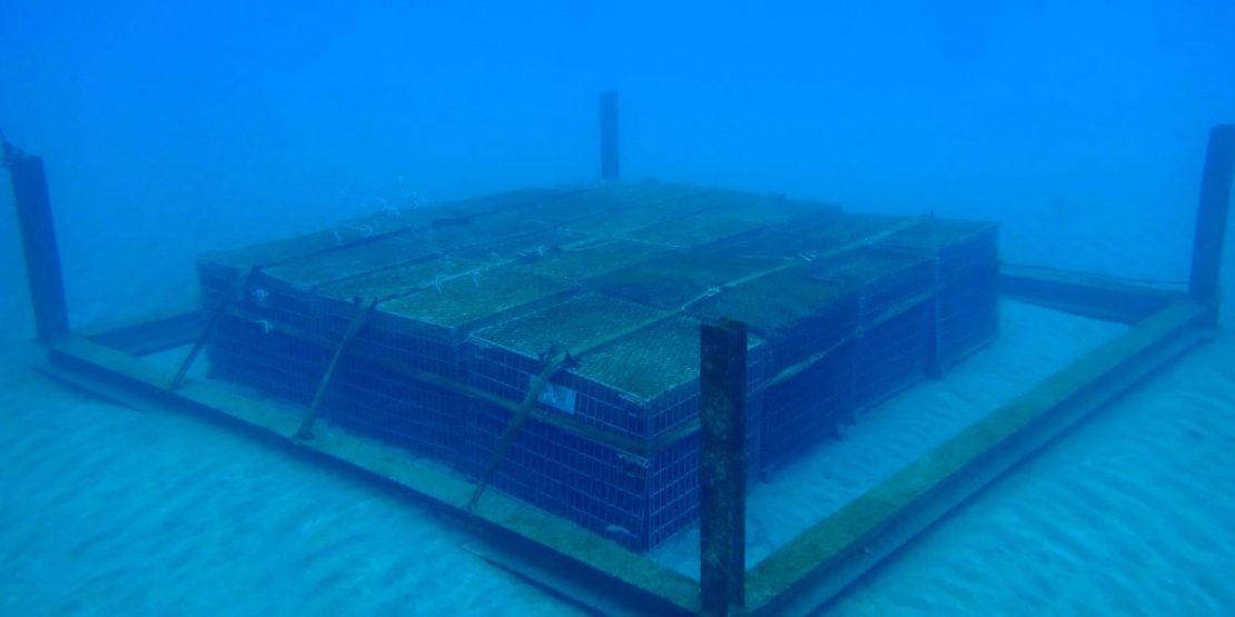 SUBRINAが海底で熟成される様子